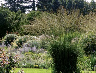 From Ornamental Grasses by Rick Darke