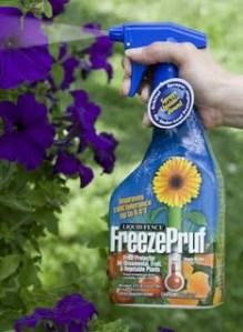 FreezePruf petunias