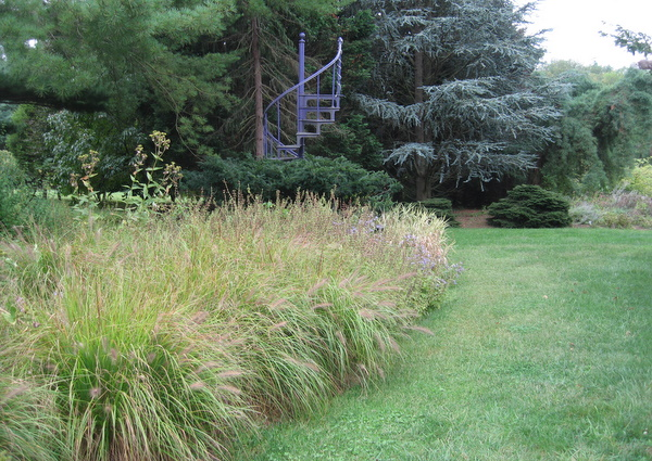 Ornamental grasses in all their glory homestead gardens for Tall grass border