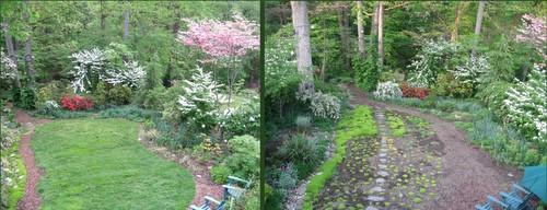 Read about my alternative lawn in Fine Gardening Magazine