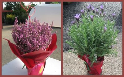 Gotta Love Heather and Rosemary for Color in a Pot