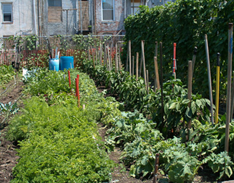 According To The Daily Green, Baltimore Is A National Leader In Urban  Gardens, Especially Community Gardens. Click Here And Go To #8 And Youu0027ll  Find This: