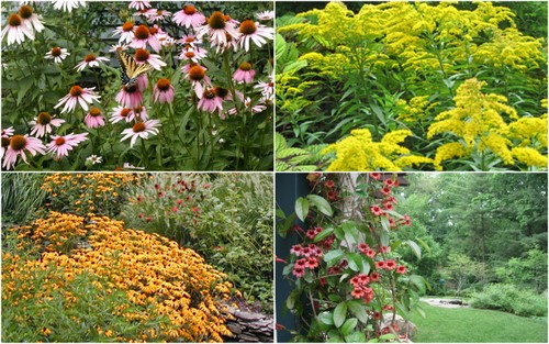 Great Native Plants For The Garden Homestead Gardens Inc