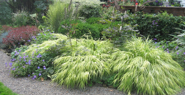 It 39 s showtime for ornamental grasses homestead gardens for Tall feather grass