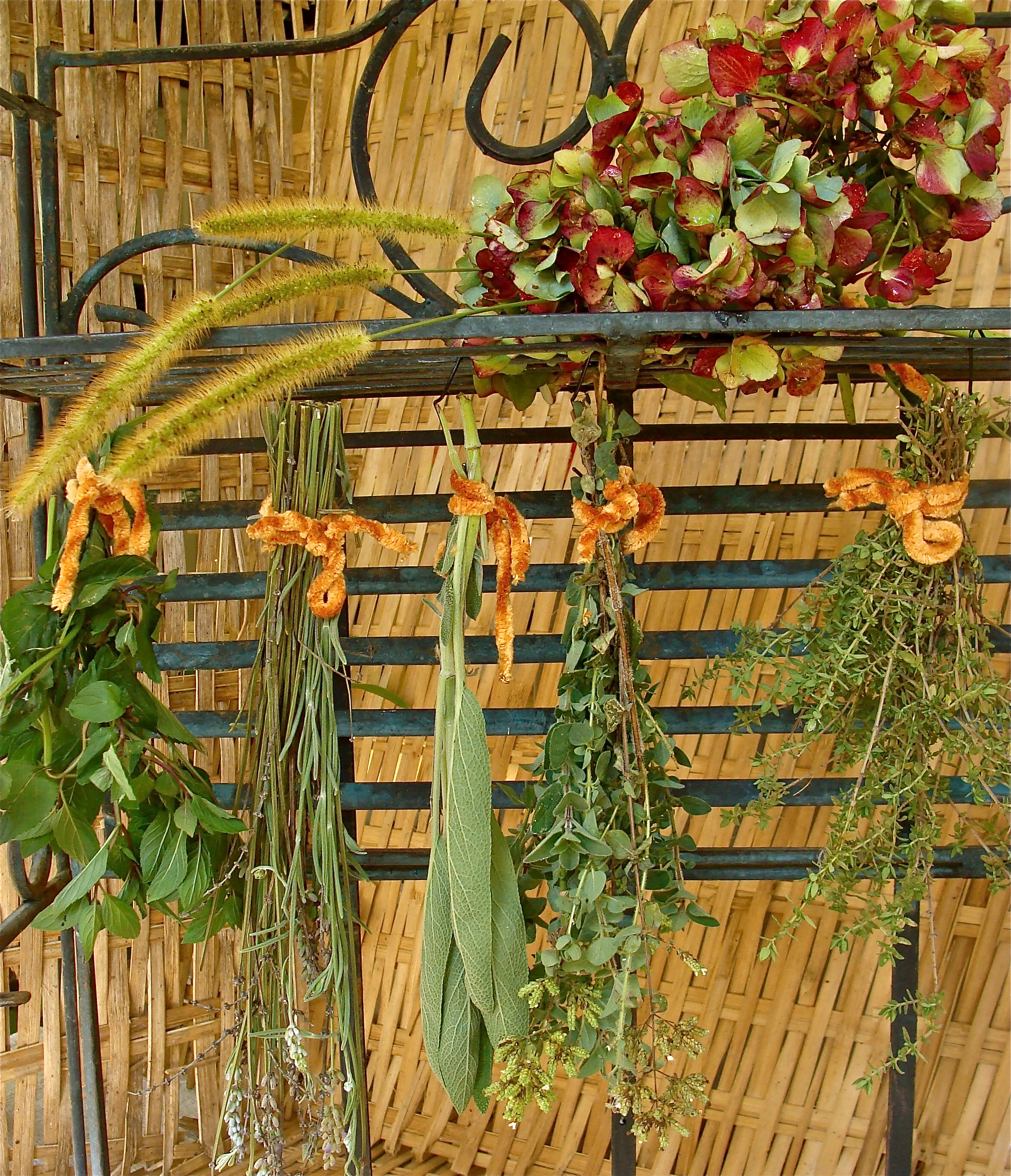 Fall Focus-Harvesting, Drying and Preserving Herbs - Homestead ...
