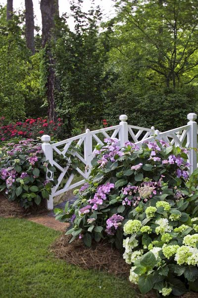 Are your Endless Summer Hydrangeas Underblooming? Here\'s how to fix ...